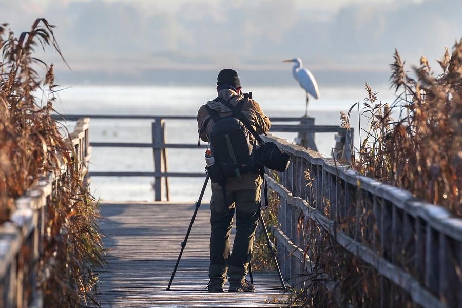 Seleccionados los doce mejores proyectos de fotografía de naturaleza de la sección oficial de #naturajazz 2019