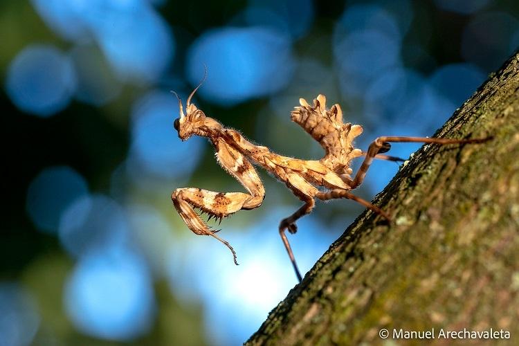 Imagen de una mantis