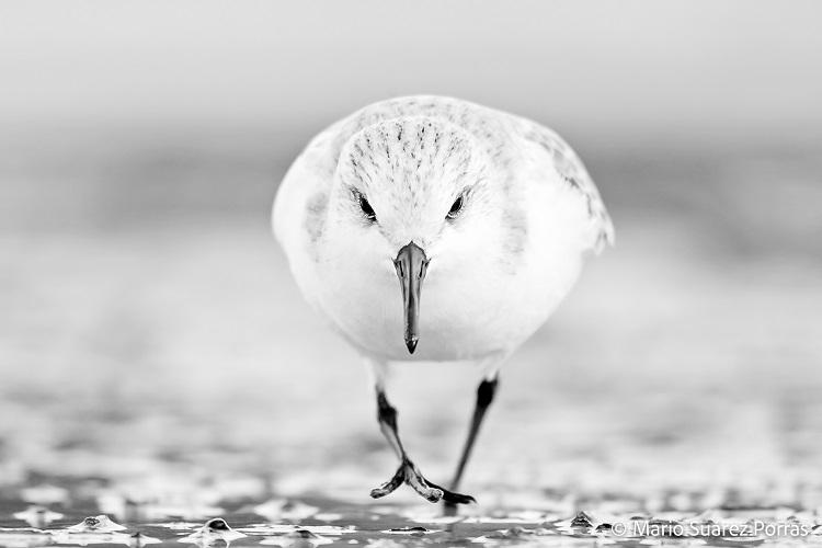 Fotografía de un ave en blanco y negro